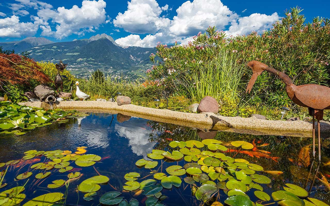 Pond with lily pads in the foreground and mountain landscape of Meran in the background