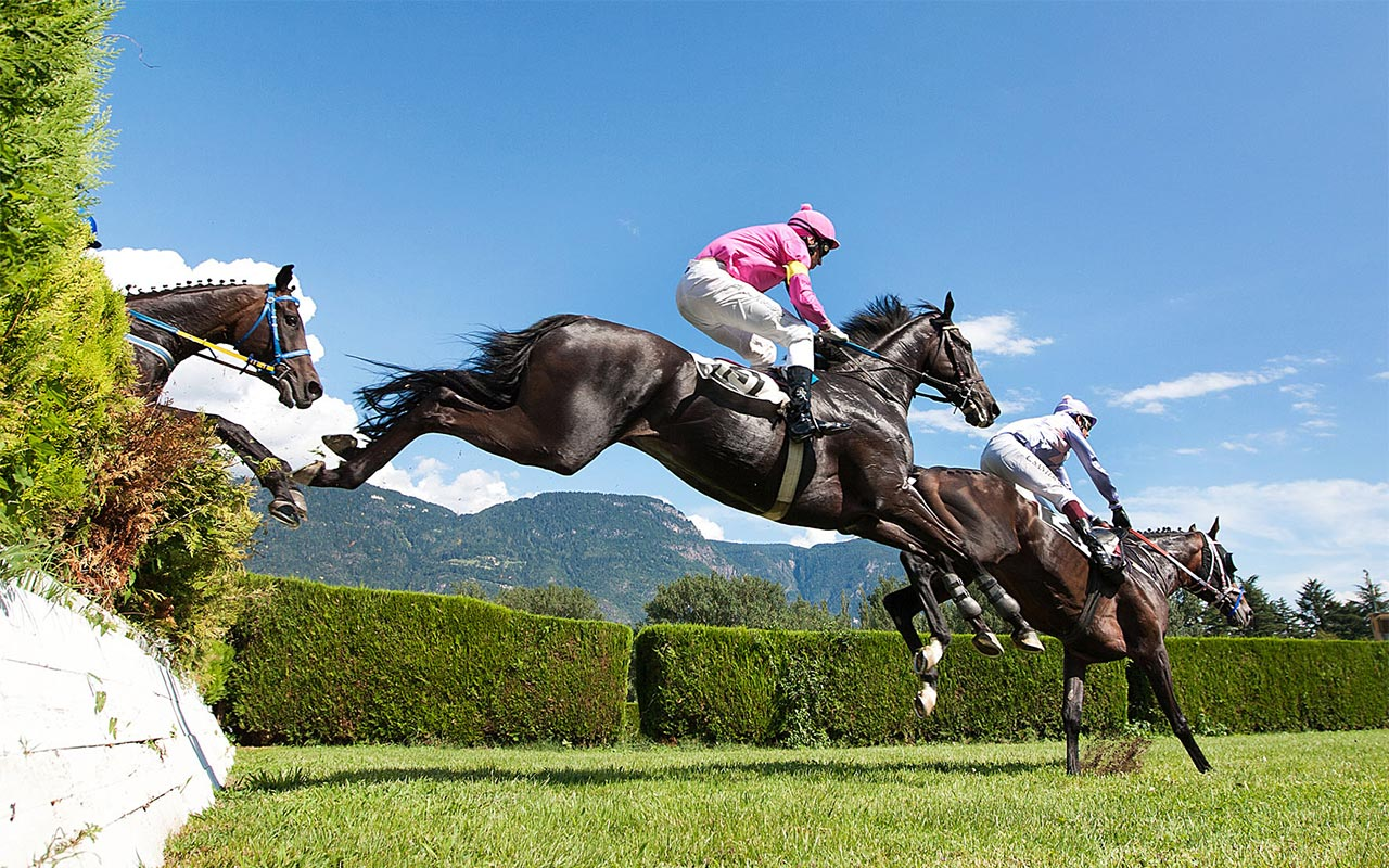 Race horses at the hippodrome of Merano (South Tyrol)